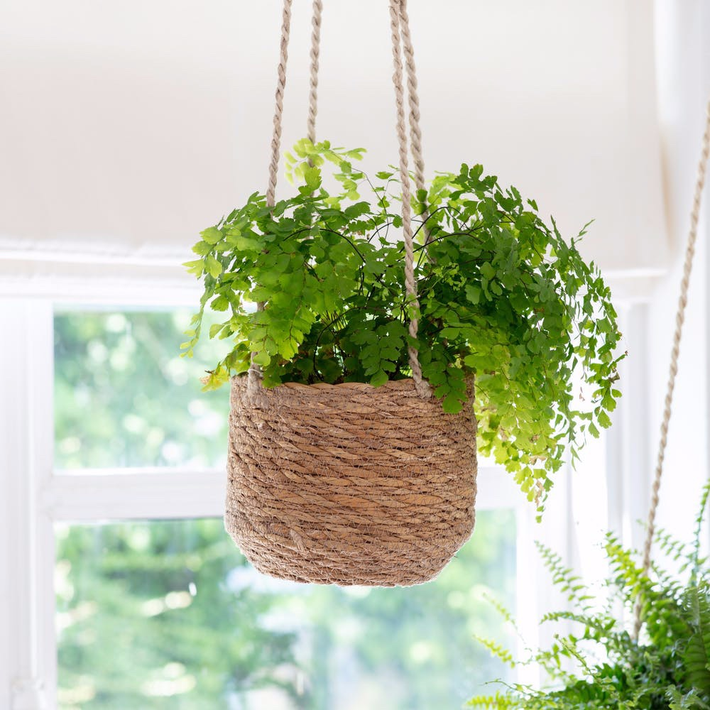Seagrass Woven Hanging Plant Pot
