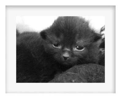 Doras Kittens