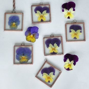 Real flower frame  - Viola