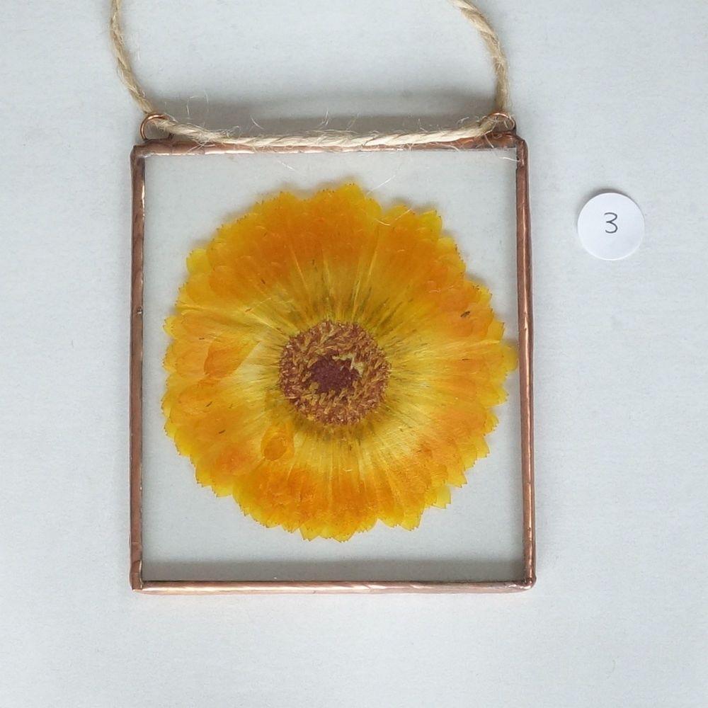marigold 1 3