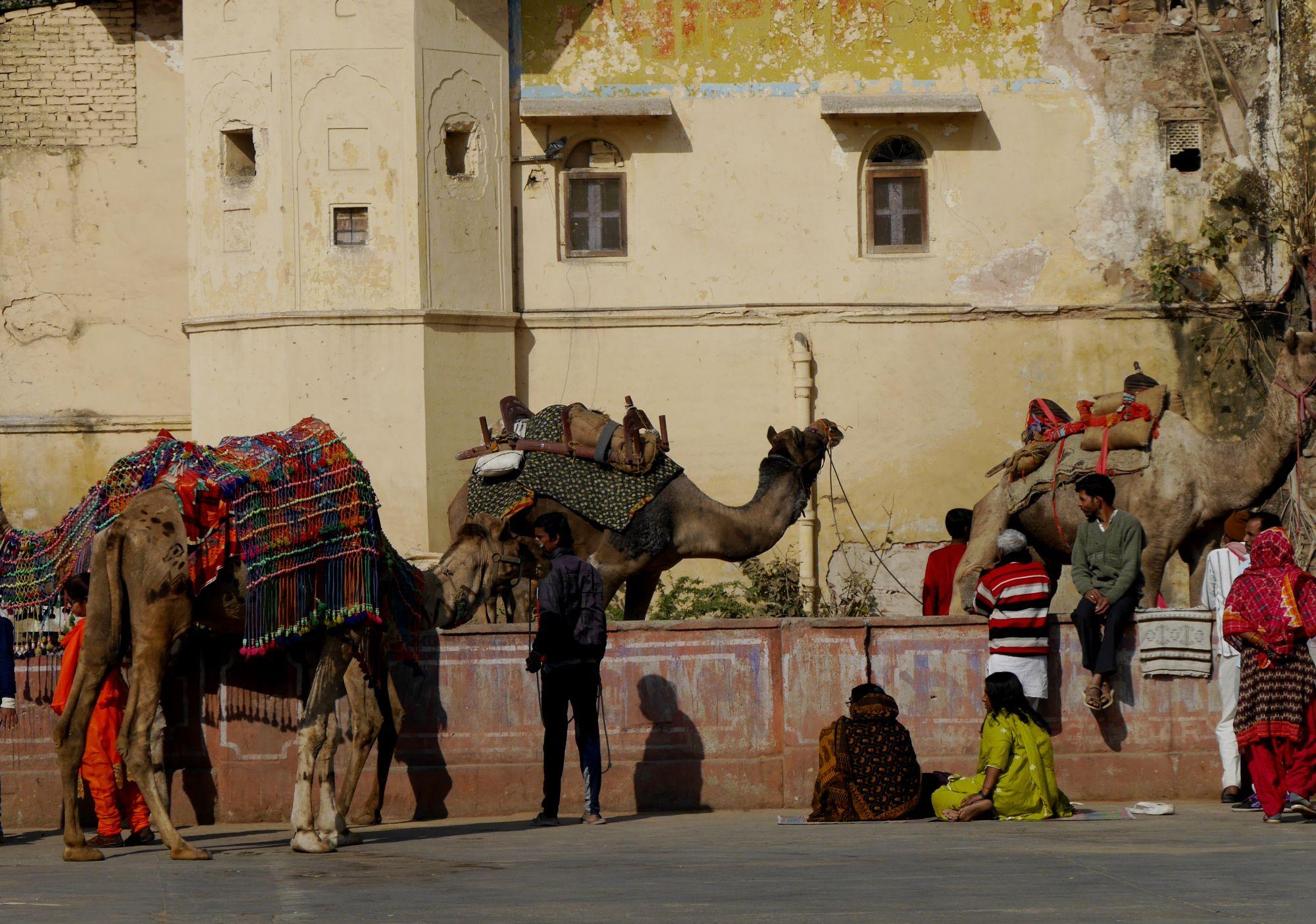 180209 Jaipur (42)