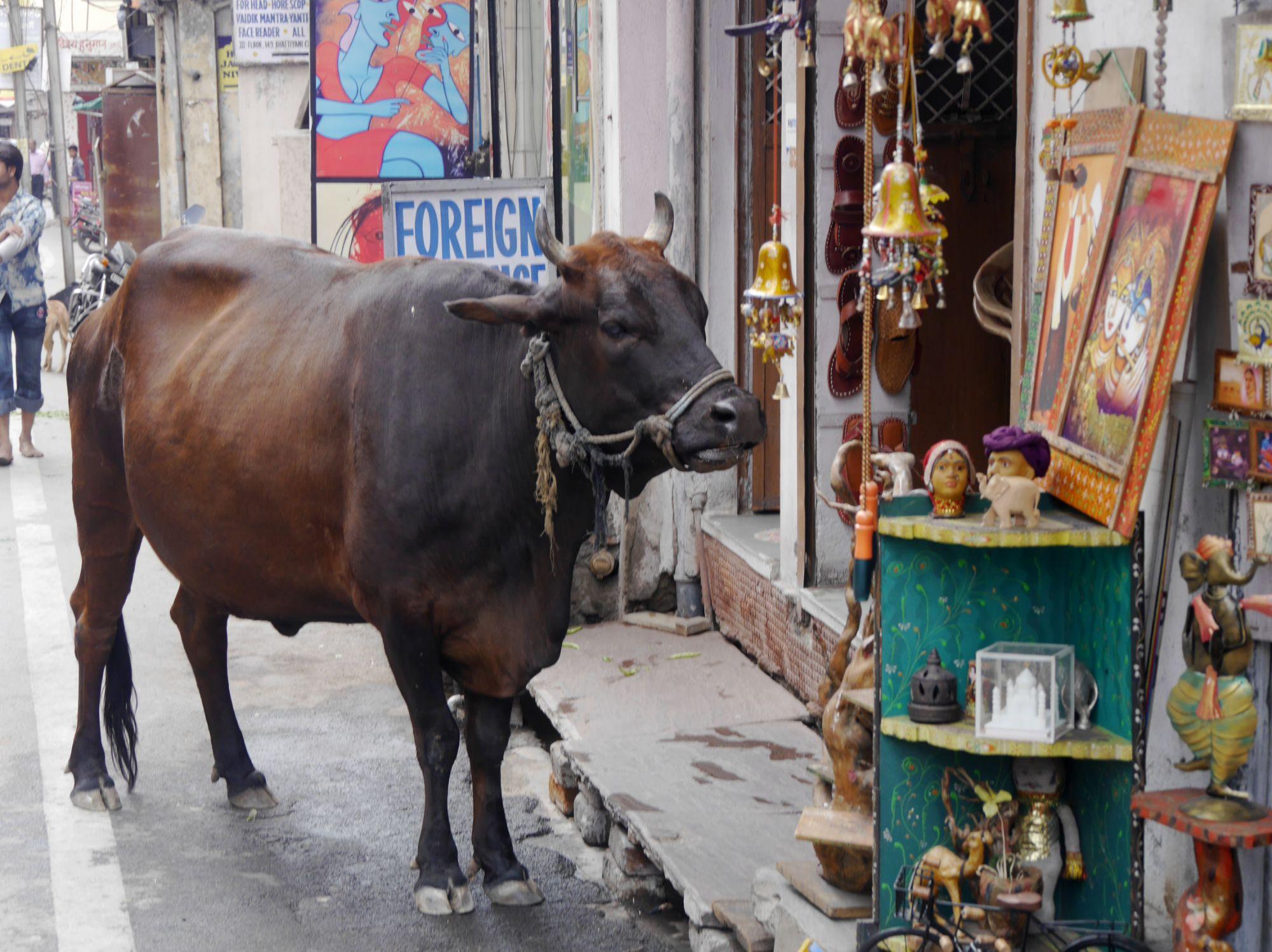 190224 Udaipur (160)