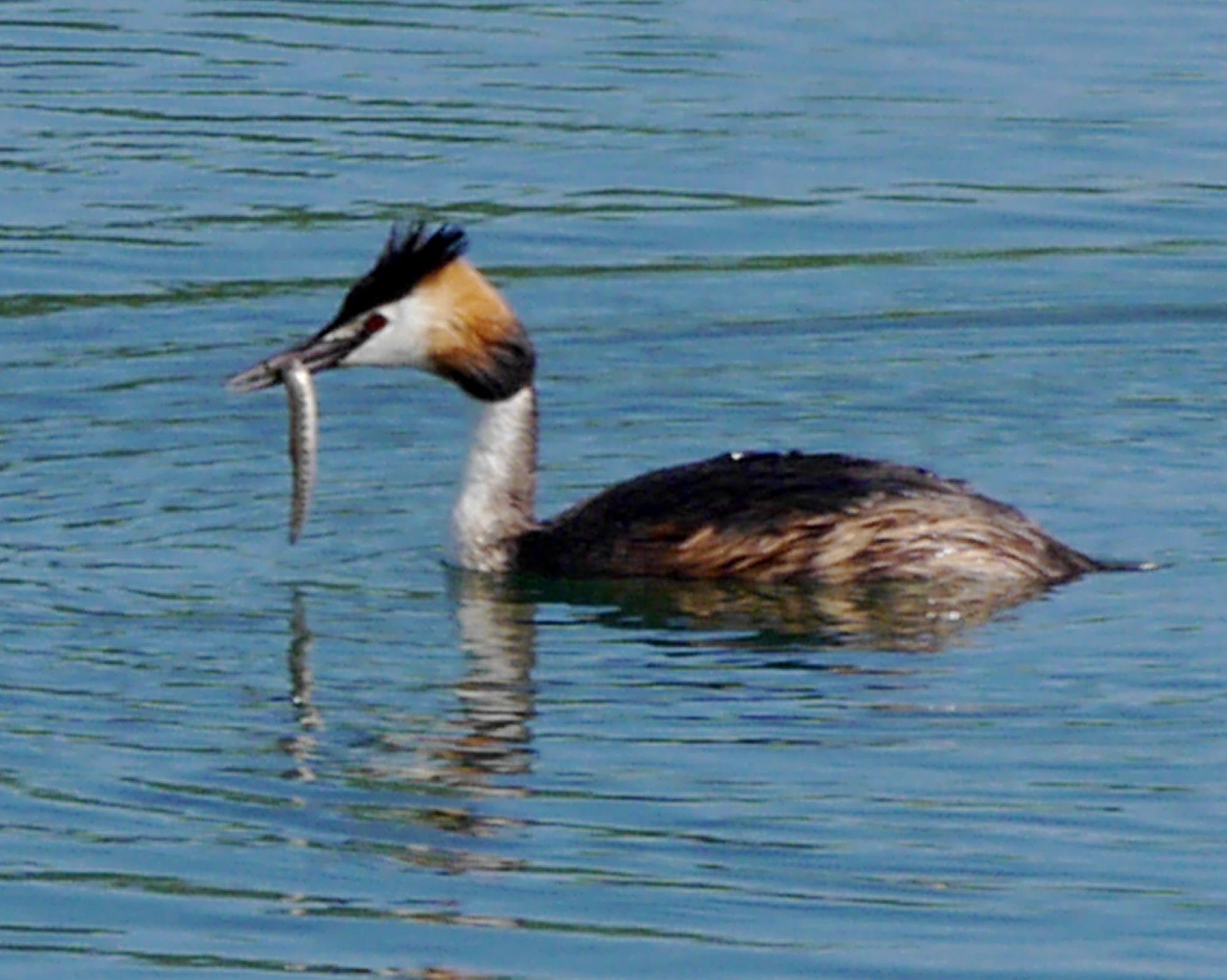180602 Arrigny bird (104)