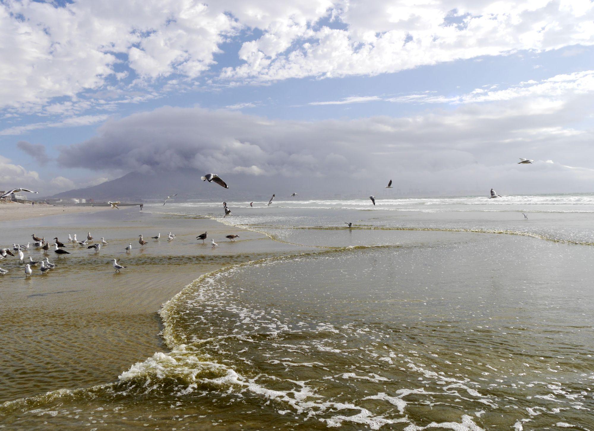 200216 Cape town (330).jpg