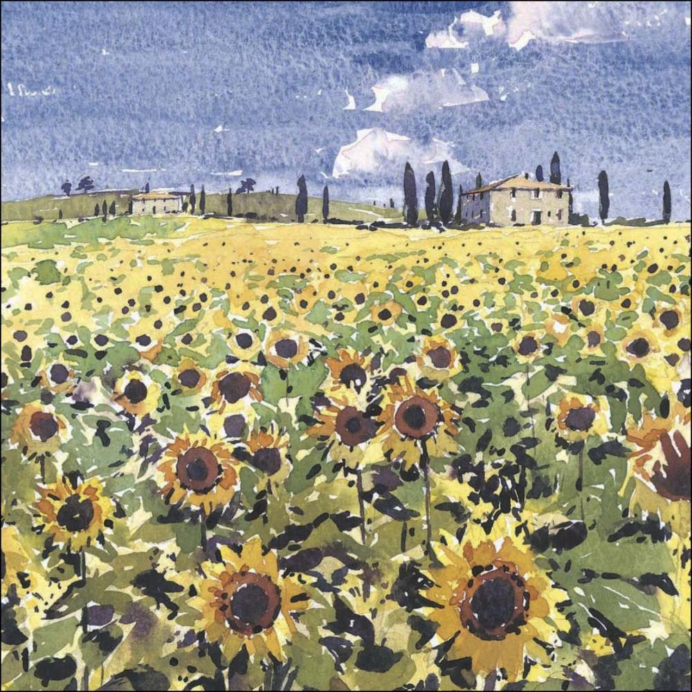 Sunflowers, Tuscany