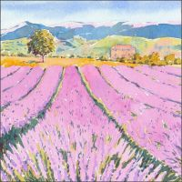 IS07 Lavender field.