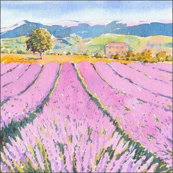 IS07 Lavender field.