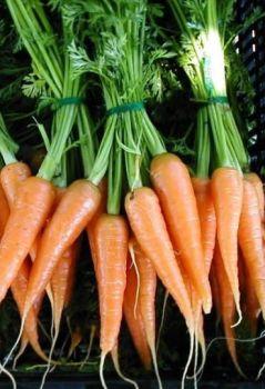 Carrot Oil  (2308)