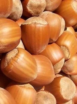 Hazelnut Oil (2312)