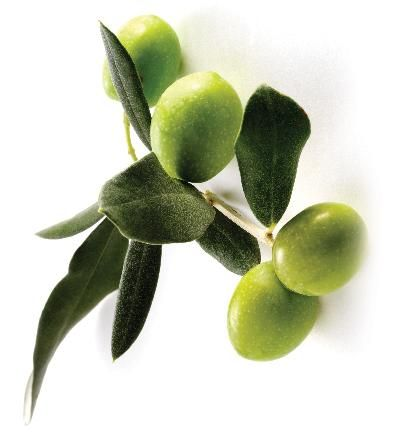 Olive Oil 50ml