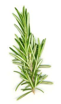 Rosemary Oil (2102)