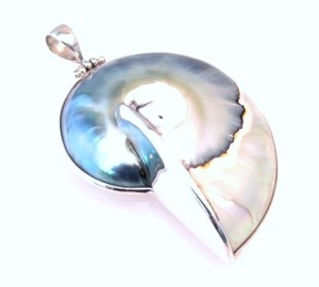 Blue Nautilus Shell Pendant - Medium