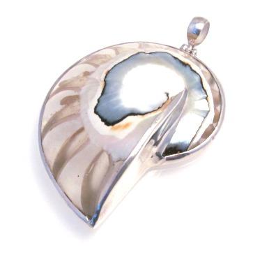 Transparent Nautilus Shell Pendant - Med