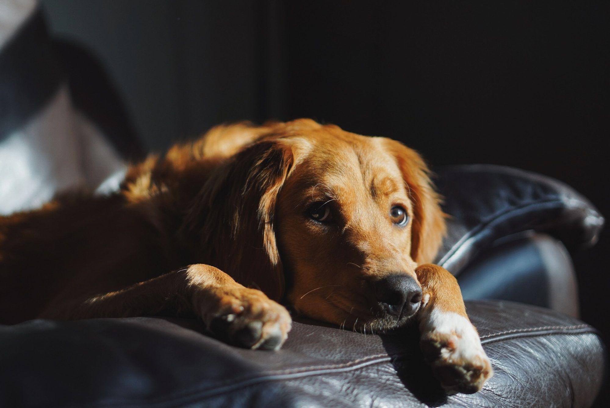 Dog Department