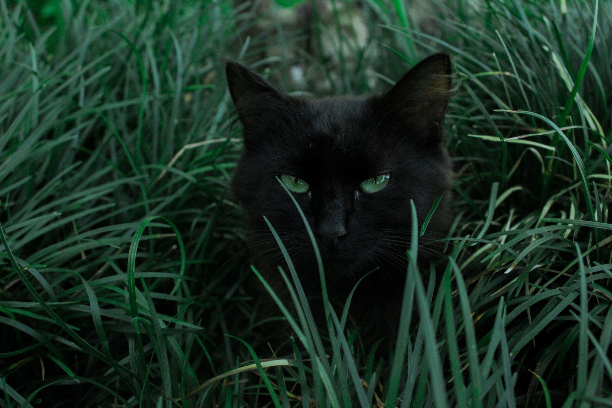 Cat Department at Riseholme Feeds