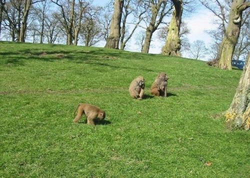 E17.08.03 - 3rd August - Knowsley Safari Park