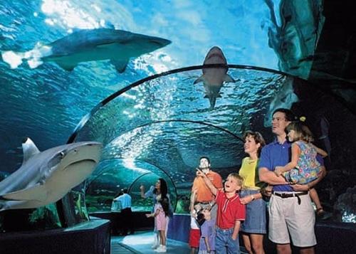 E17.08.08 - 8th August - Blue Planet Aquarium or Cheshire Oaks