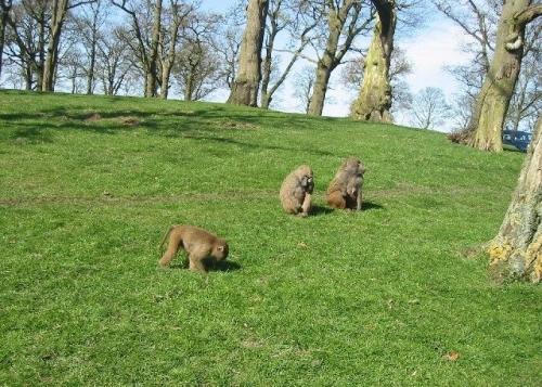 E17.08.01 - 1st August 2017 - Knowsley Safari Park