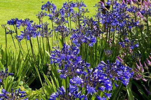 E18.06.9 - 9th June 2018 - RHS Chatsworth Flower Show