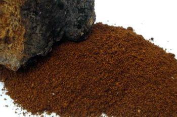 fire makinf chaga powder from fungus by beaver bushcraft
