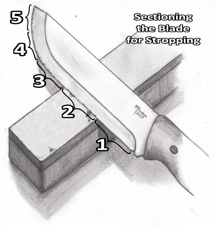 Sectioning the Blade for Stropping