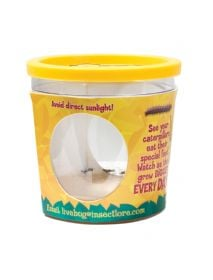 REFILL CATERPILLAR VOUCHER for Insect Lore Butterfly Garden Hatching Kit