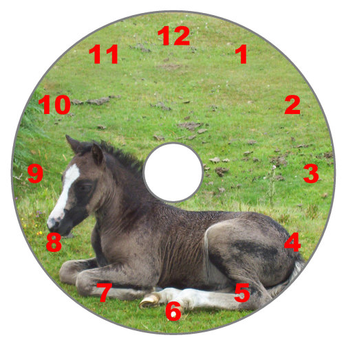 New Forest Pony (Numeric Dial)