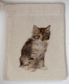 Kitten (4)