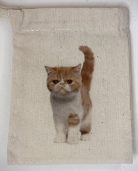 Kitten (3)