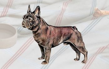 Bulldog (French)