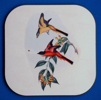 Birds 6