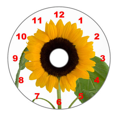 Sunflower (Numeric Dial)