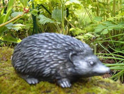 small hedgehog