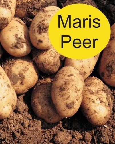 MARIS PEER