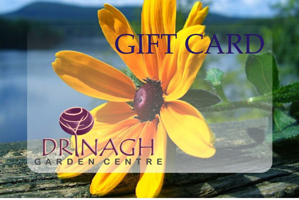 GIFT CARD €10.00