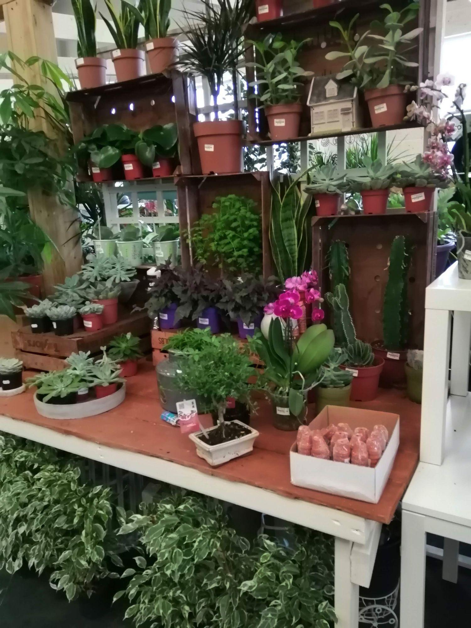 indoor plants area