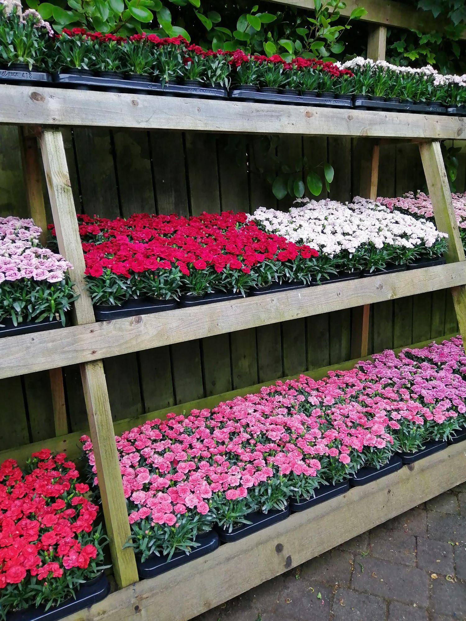 outdoor plants area