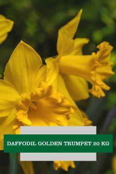 DAFFODIL GOLDEN TRUMPET 20 KG