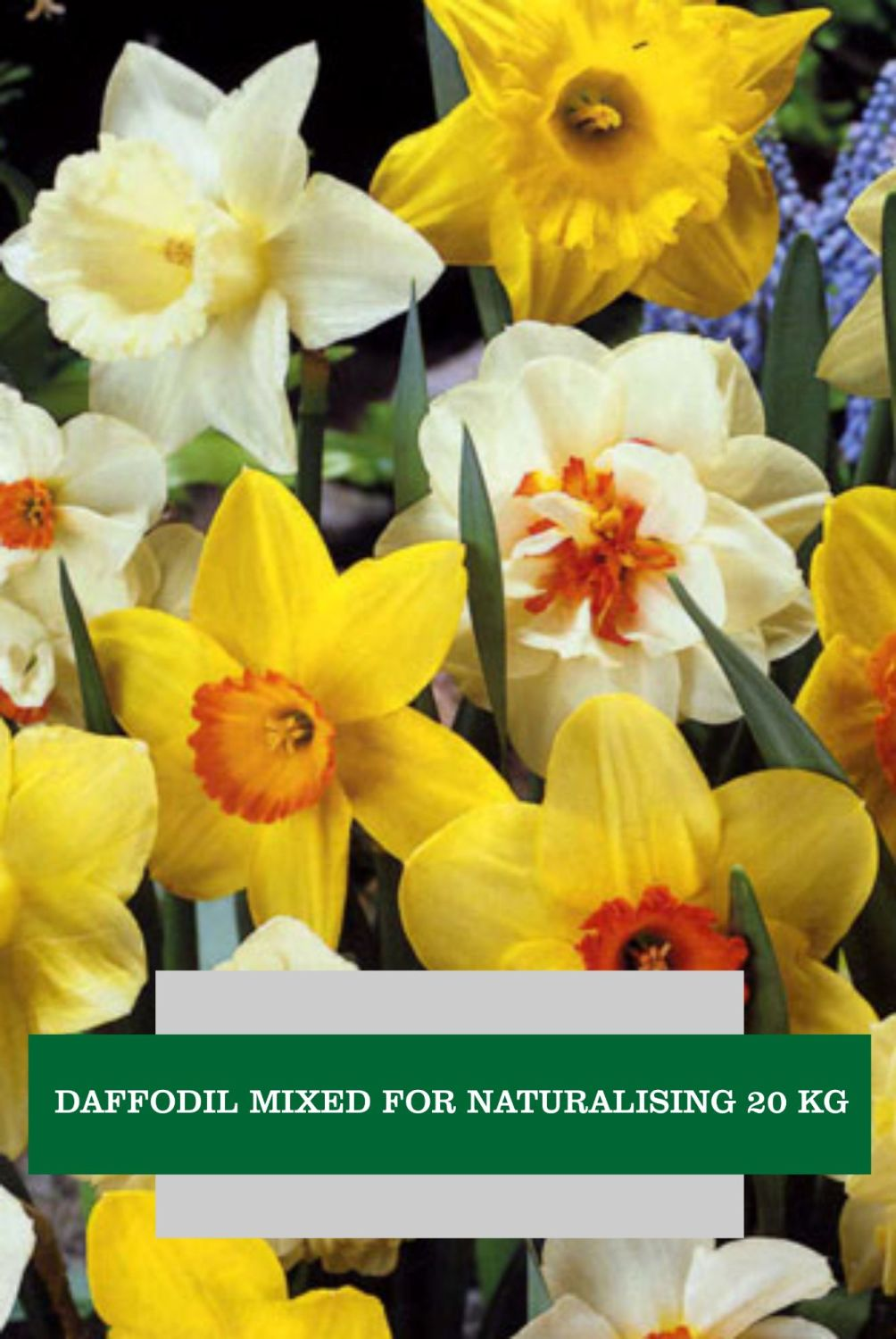 DAFFODILS MIX FOR NATURALISING 20KG