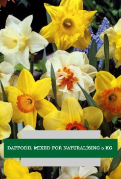 DAFFODIL MIXED FOR NATURALISING 5 KG