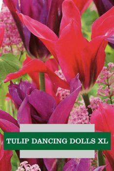 TULIP DANCING DOLLS XL