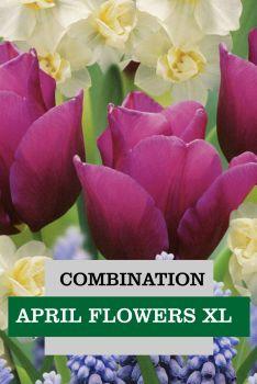 COMBINATION APRIL FLOWERS XL