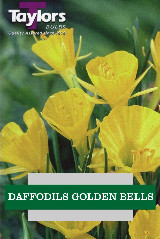 DAFFODILS GOLDEN BELLS