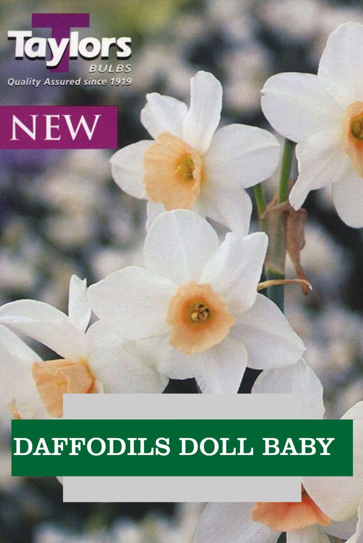 DAFFODILLS DOLL BABY