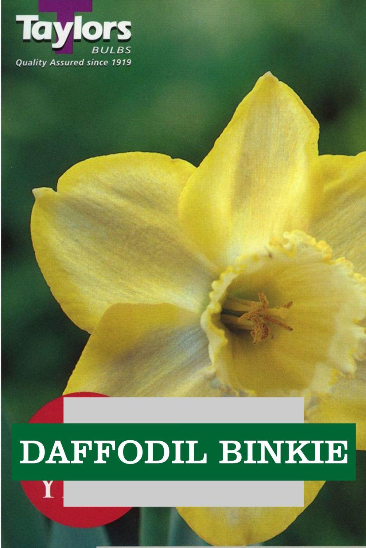 DAFFODIL BINKIE