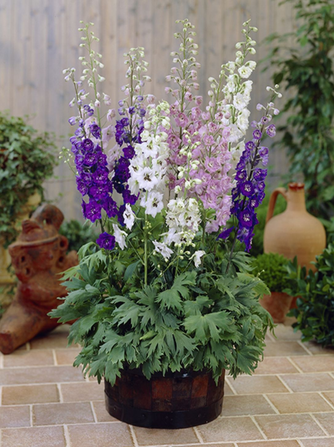 DELPHINIUM MAGIC FOUNTAINS MIX
