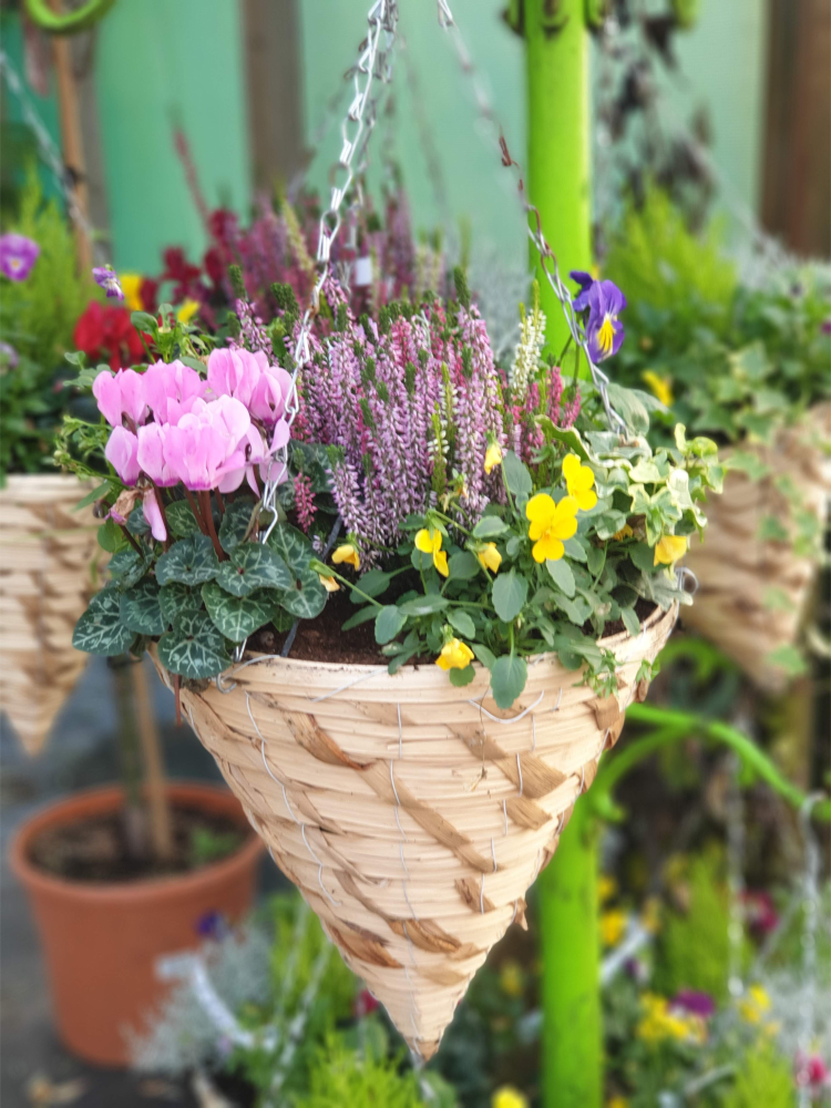 PLANTED WITNER HANGING CONE