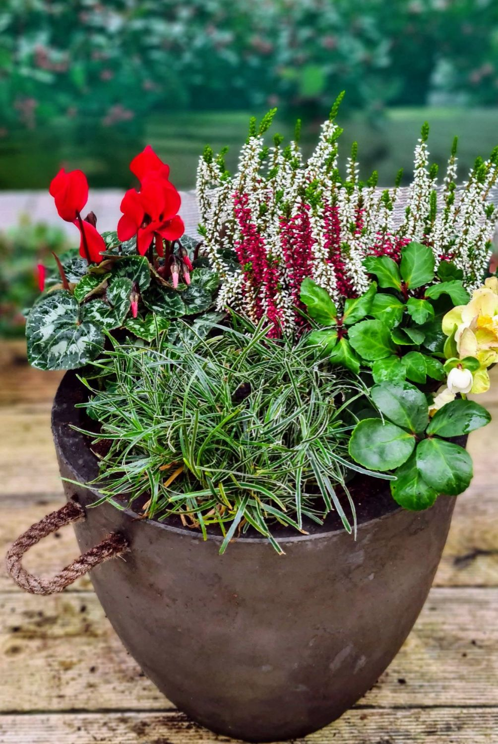 WINTER PLANTER BLACK POT WITH ROPE HANDLES