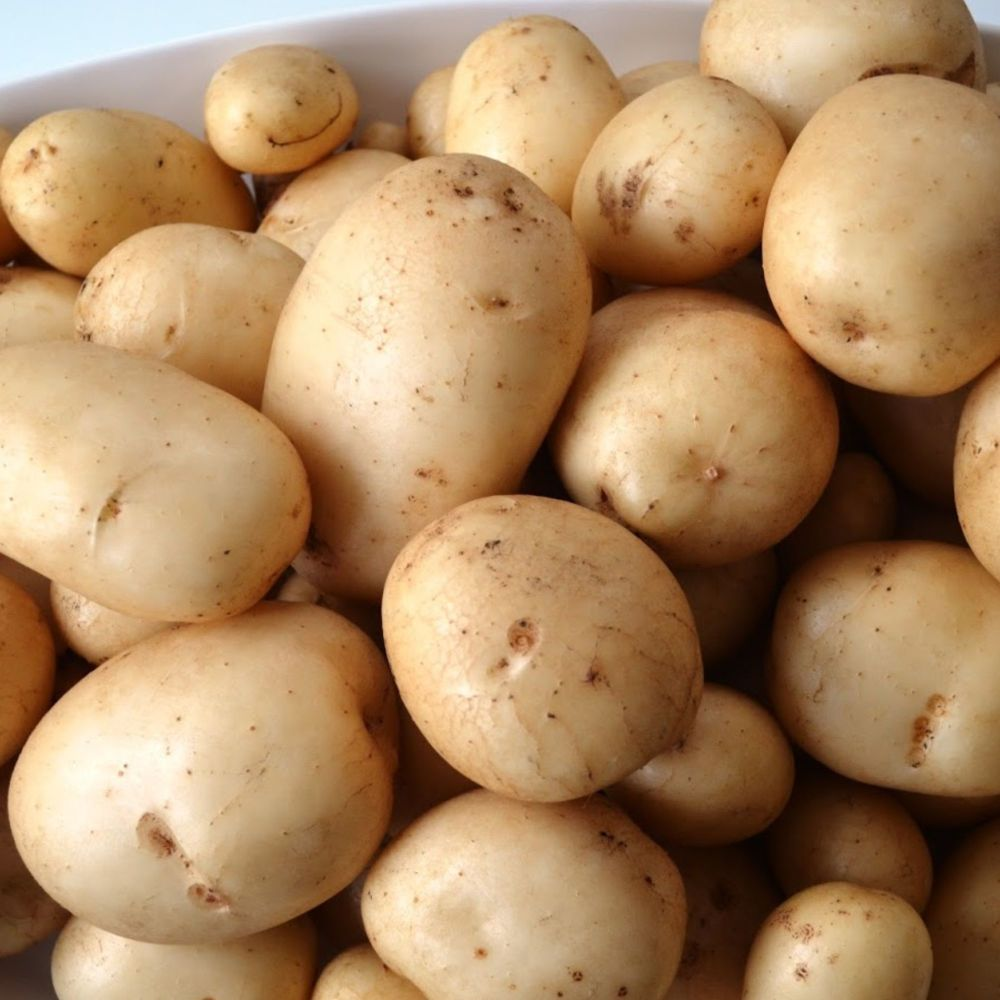 PENTLAND JAVELIN 1st early seed potatoes