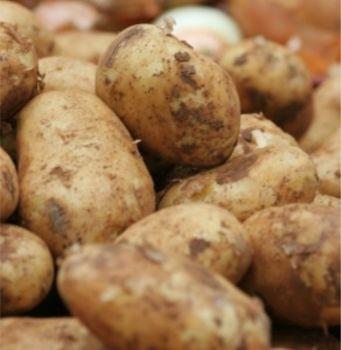 MARIS PEER  second earlies seed potatoes